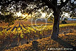 Napa Valley vineyards stock pictures photos prints of California