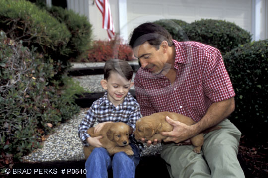 cute golden retriever puppies pictures. Golden Retriever Puppies with