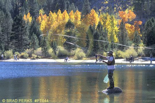 Picture: Fisherman Fly Fishing at Bishop Creek - Royalty ...