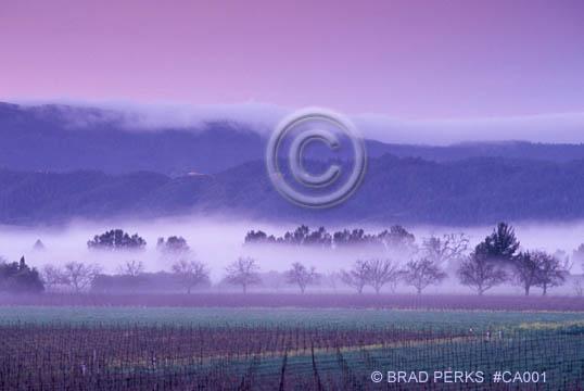 Winter Sunrise with Fog - Napa